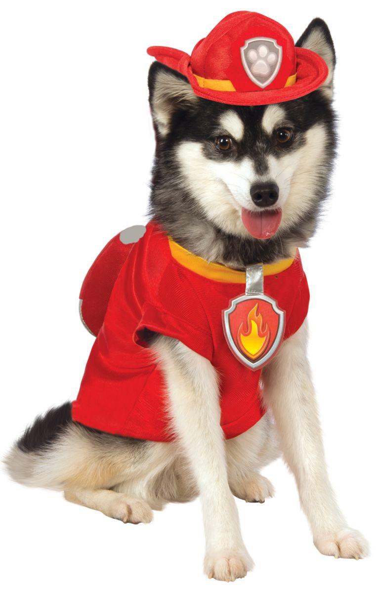 когда костюмы для собаки картинки загадок