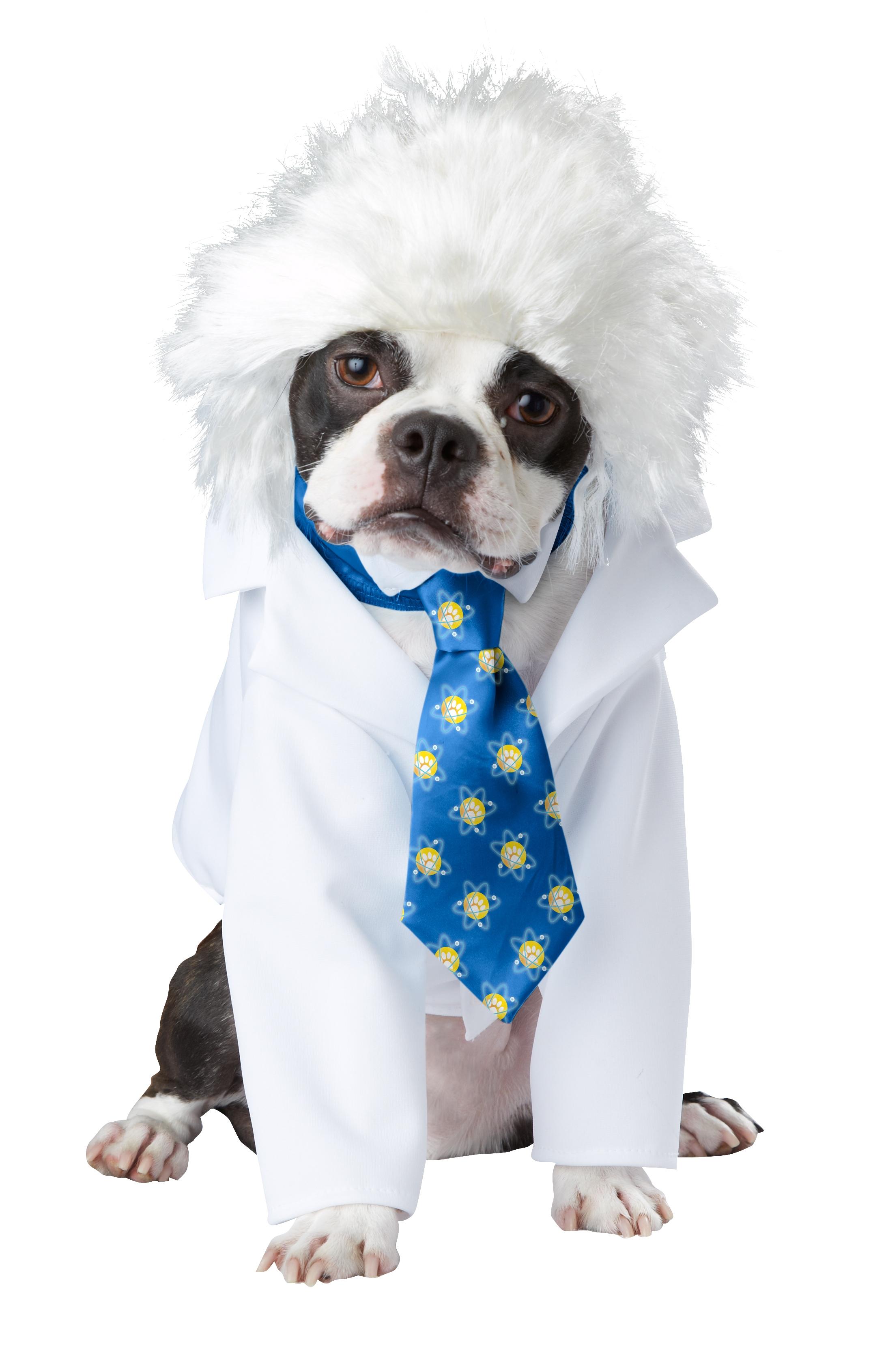 костюм для собачки картинки склонить немного