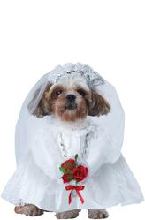 Костюмы для собак - Ненаглядная невеста